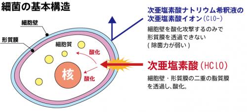 細菌の基本構造